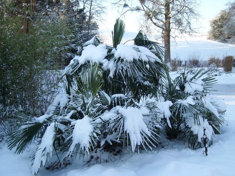 Zone 6 (-20°C) pour mon jardin cet hiver! Neige710