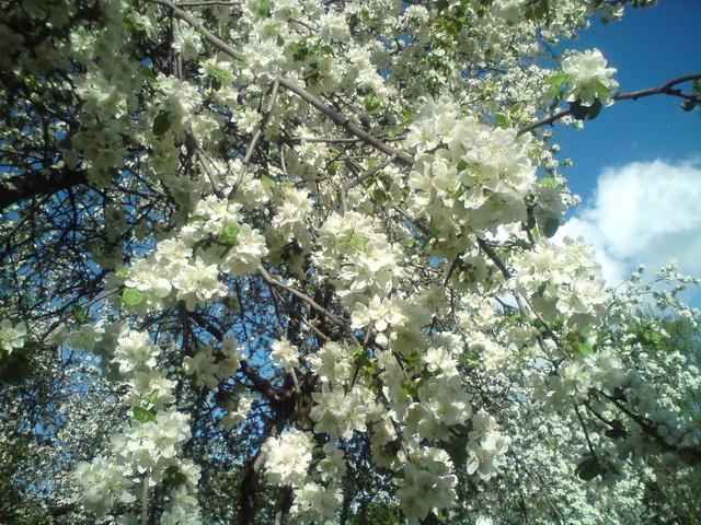 Запах весны. Напрягаем нюх!!! - Страница 5 Dsc00011