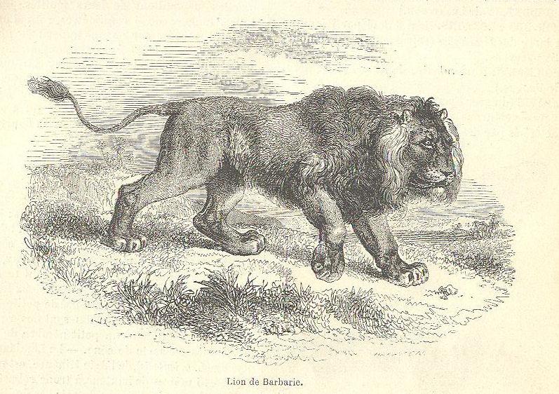 VIEUX BOUQUINS Lion310