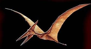 Ptéranodon Pteran10