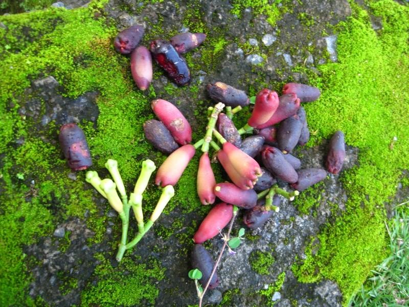 Ile aux épices...les Moluques Img_1316