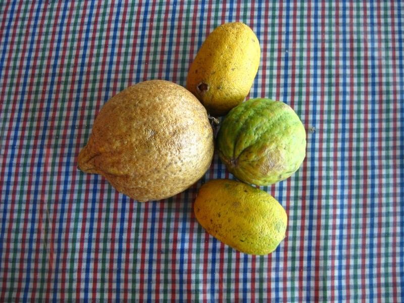 Citrus made in Indonesia Img_1510