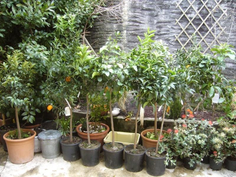 Quelques uns de mes Citrus P1120111