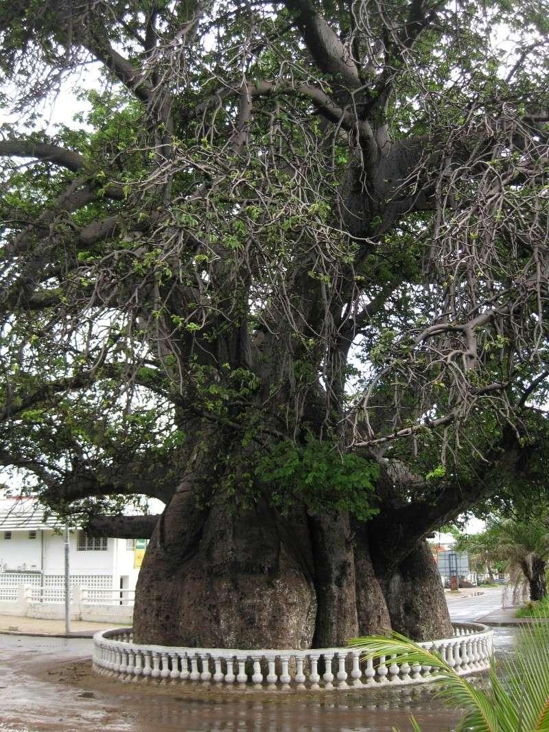 Baobabs Photos72