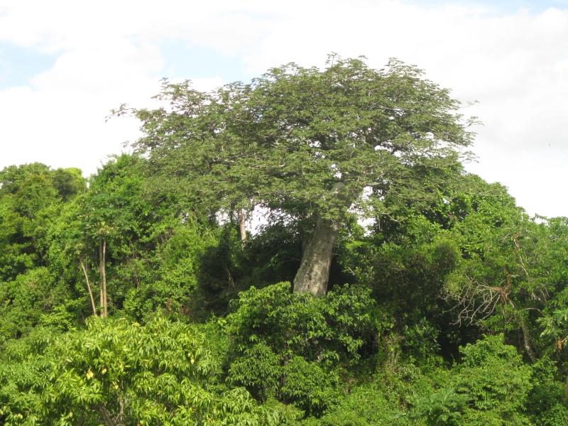 Baobabs Photos73