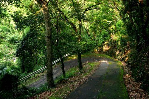 Moutain Roads of Japan 13248610