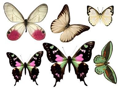 Papillons 12688610