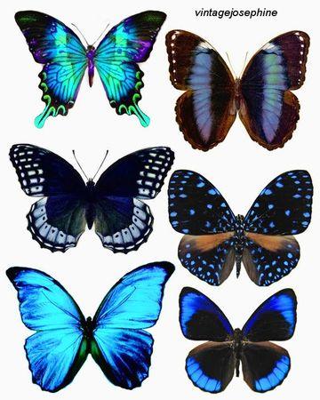 Papillons 56094410