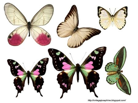 Papillons 56094411