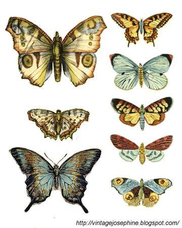 Papillons 56094412