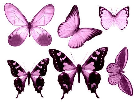 Papillons 56094510