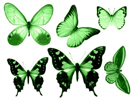 Papillons 56094511