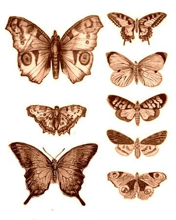 Papillons 56094610