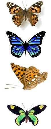 Papillons 56094611