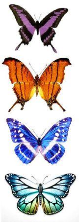 Papillons 56094612