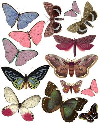 Papillons Swirly12