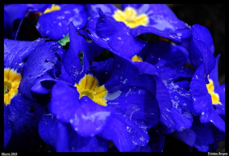After the rain Dsc_0920