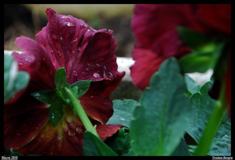 After the rain Dsc_0921