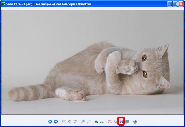 chat agé et dent enlevé - Page 2 Sans_t11