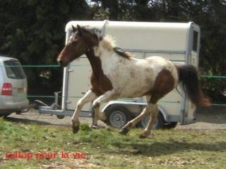 (29) {NL 02/09/08} Eclair pottok SP, 17 ans, 1m42 - 650€ [liliec35] - Page 2 21782210