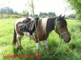 (29) {NL 02/09/08} Eclair pottok SP, 17 ans, 1m42 - 650€ [liliec35] - Page 2 21784110