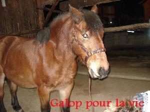 ROXAN poney 15ans (38) 495d3210