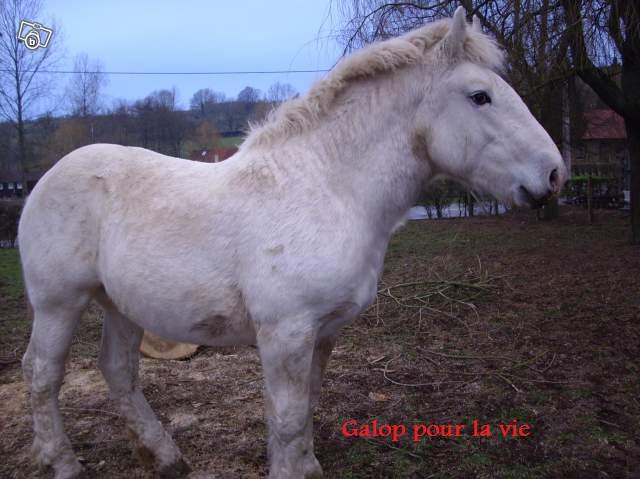 Titus Boulonnais 2ans 600e (62) 66177310