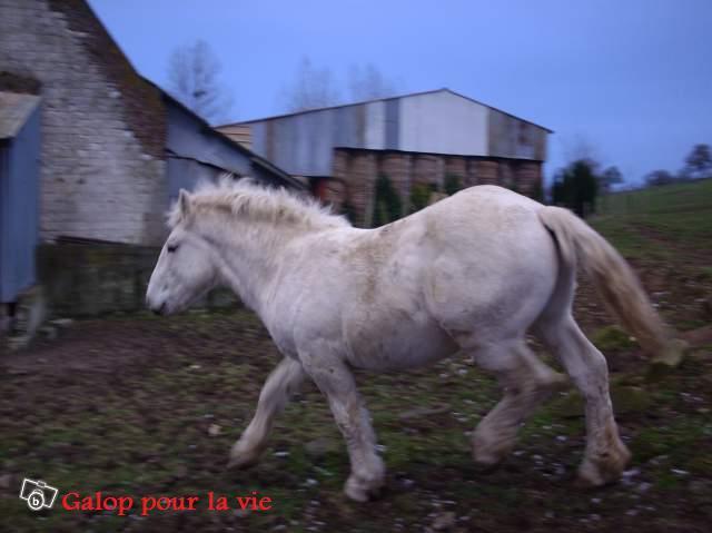 Titus Boulonnais 2ans 600e (62) 66653210
