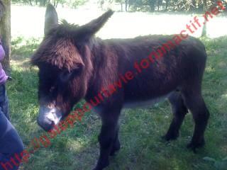 ATHOS - ONC âne né en 2006 - adopté en décembre 2015 par Prescilla Athos10