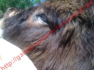 ATHOS - ONC âne né en 2006 - adopté en décembre 2015 par Prescilla Athos110