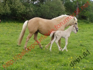 BELLA - ONC Selle palomino  née en 1996 - adoptée en juillet 2010 Bellat10