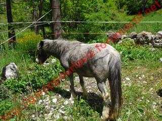 GRISETTE - ONC Poney présumée née en 1989 - adoptée en mai 2010  - Page 3 Dsc01112