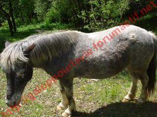 GRISETTE - ONC Poney présumée née en 1989 - adoptée en mai 2010  - Page 3 Dsc01113
