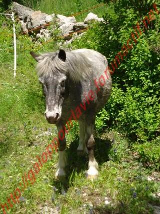 GRISETTE - ONC Poney présumée née en 1989 - adoptée en mai 2010  - Page 3 Dsc01114
