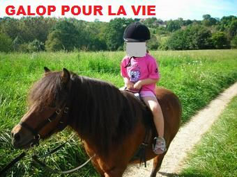 (24) Fly et Mo poneys hongre montables 9 ans et 6 ans Fly1010
