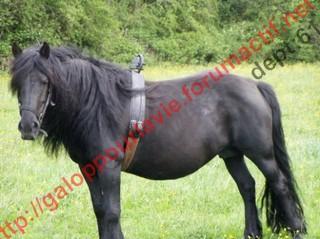 GRIOTE - Mérens née en 1994 - adoptée en novembre 2010 par Ysabelle Griott11