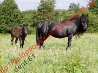 GRIOTE - Mérens née en 1994 - adoptée en novembre 2010 par Ysabelle Griott12