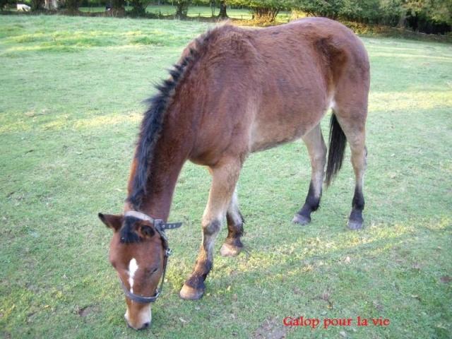 SAFRAN  - ONC Poney né en 2006 - adopté en octobre 2009 par Jean-Claude - Page 2 Imgp1212