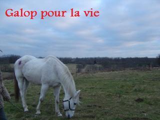 MARADAY MOONRAKER dit Blanc Blanc - ONC né en 1992 - adopté en mars 2009 Photos10