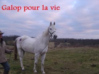 MARADAY MOONRAKER dit Blanc Blanc - ONC né en 1992 - adopté en mars 2009 Photos11