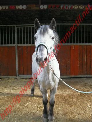 Apache poney - placé hors association Poney_10