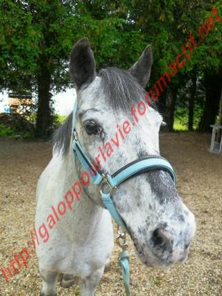 Apache poney - placé hors association Poney_13