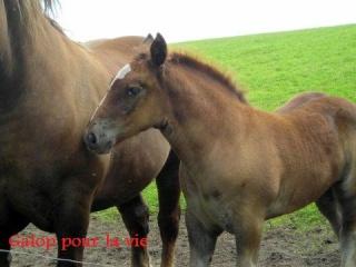 UMBRELLA - Trait breton née en 2008 - adoptée en janvier 2009 par Sophie Poulic10