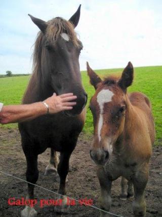 UMBRELLA - Trait breton née en 2008 - adoptée en janvier 2009 par Sophie Poulic11