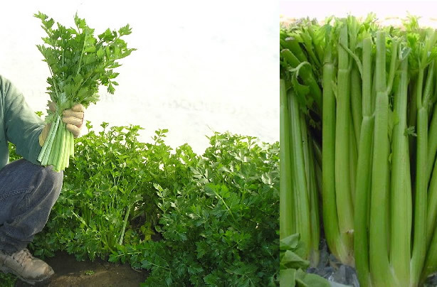 Assignment 2: Two in One (similar objects) Due Tues Feb 3 Celery10