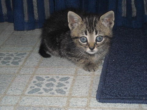 My adorable cat Lucy! Kitten10