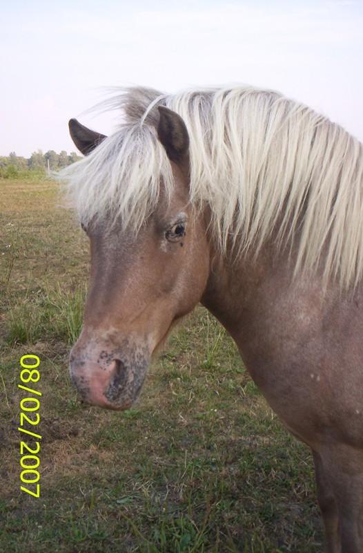 My adorable littel Pony!!!!!!!! sooo cute!!!!! Ogre10