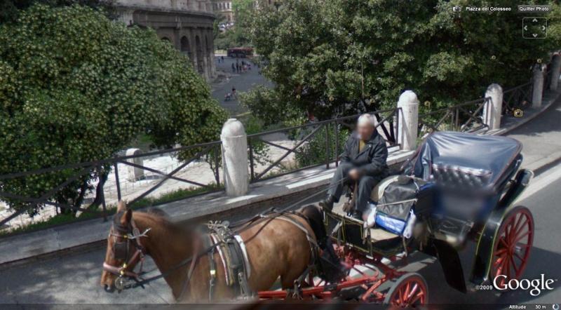 STREET VIEW : Les carrosses, les calèches dans le monde Cheval11