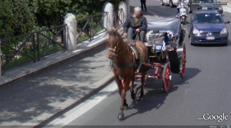 STREET VIEW : Les carrosses, les calèches dans le monde Cheval12