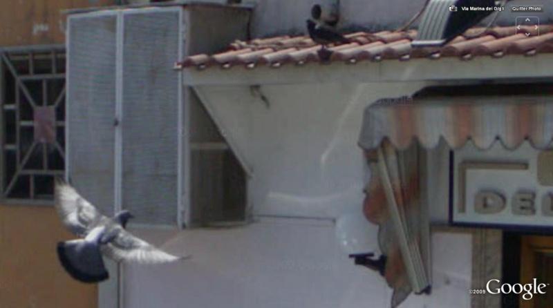 volatiles visibles sous SV et GOOGLE MAPS Oiseau10